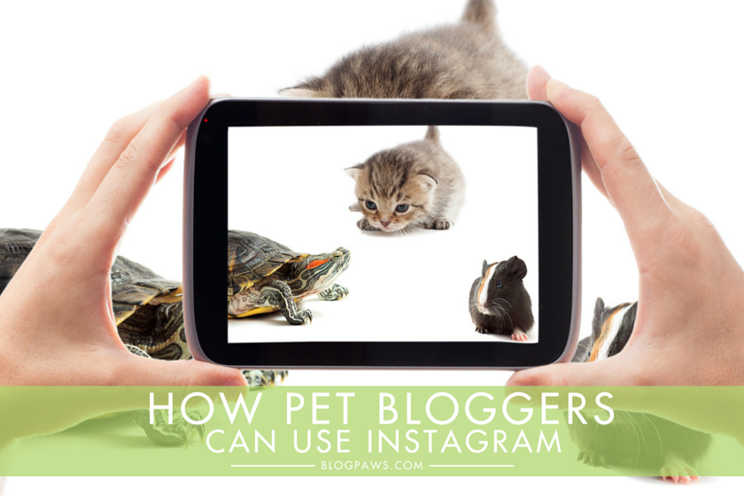 How Pet Bloggers Can Use Instagram