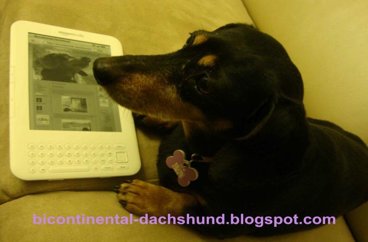 dachsund