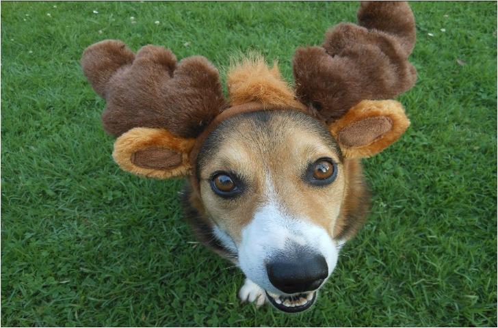 dog_reindeer