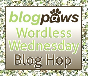 Link Up On The BlogPaws Wordless Wednesday Blog Hop!