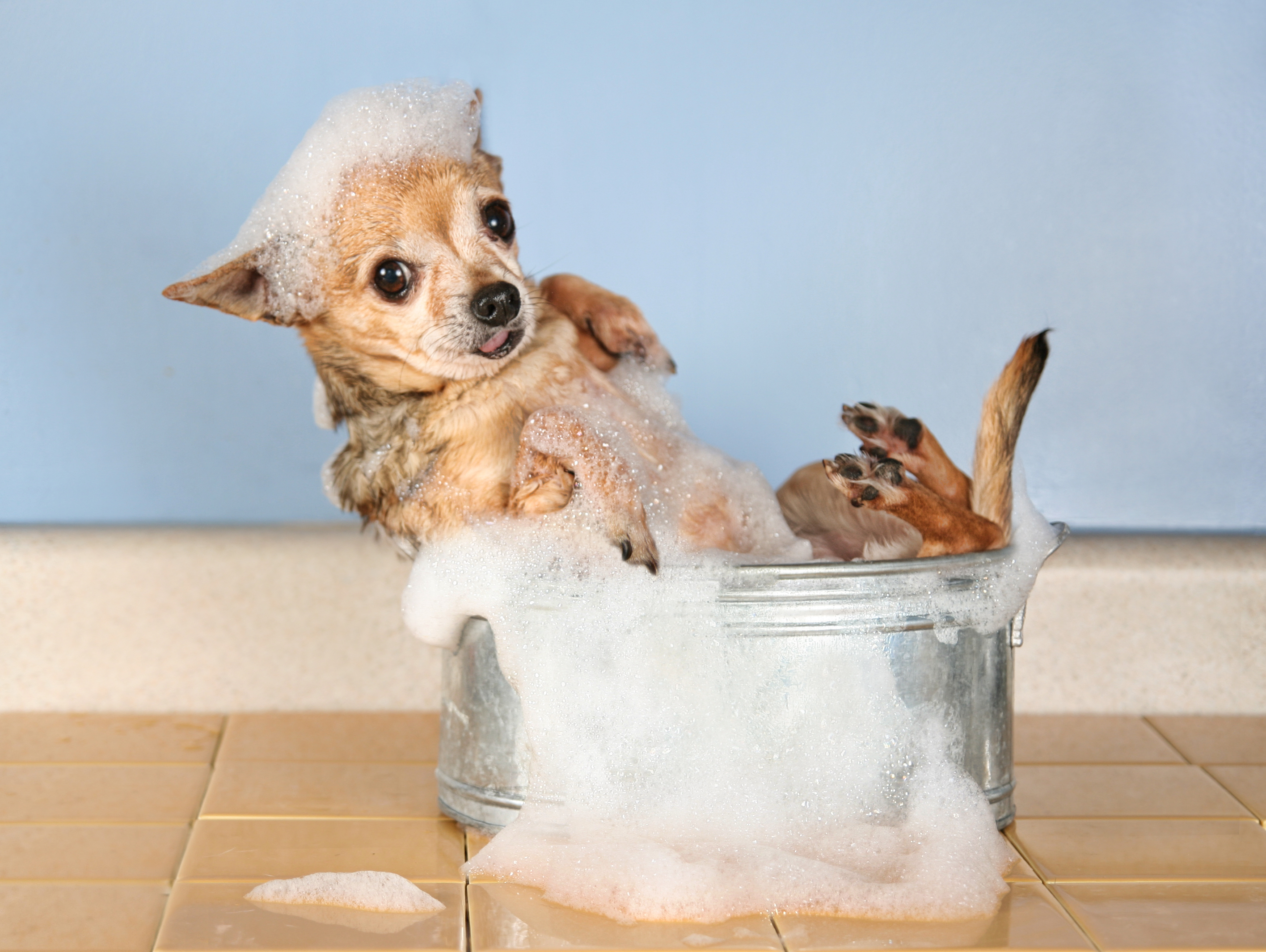 What S On Your Pet Blogging Bucket List Blogpaws