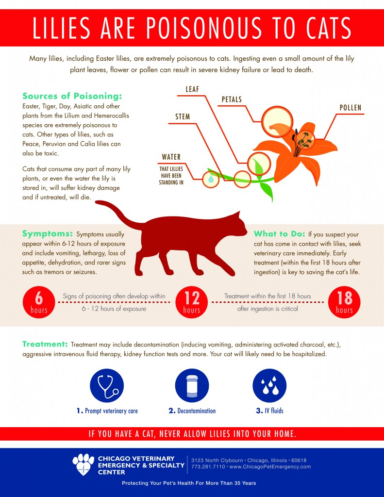Lily-Infographic_FINAL JPEG
