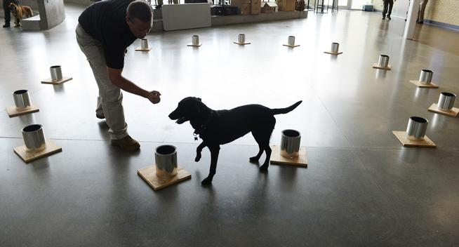 ATF canine testing for explosives recognition.
