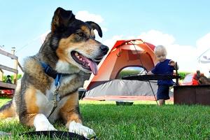 pet camping