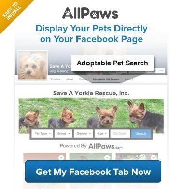 AllPaws FB tab