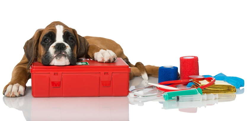Pet first aid awareness