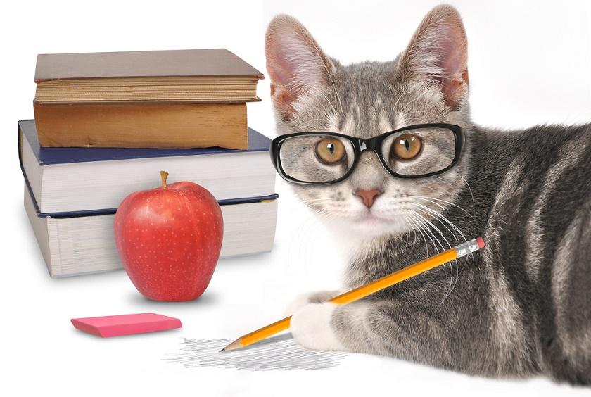 cat school
