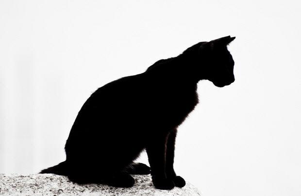 black-cat-bad-luck