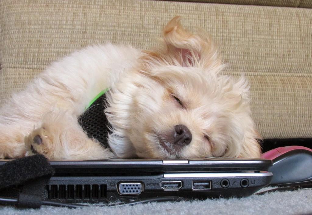 dog tech