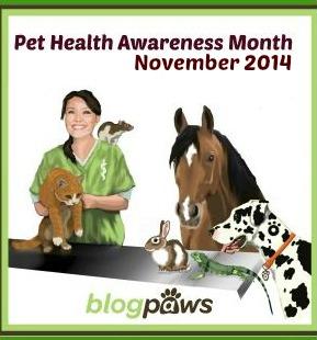 blogpaws health