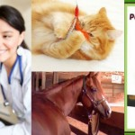 Thumbnail image for BlogPaws Celebrates Pet Health Awareness Month Blog Hop