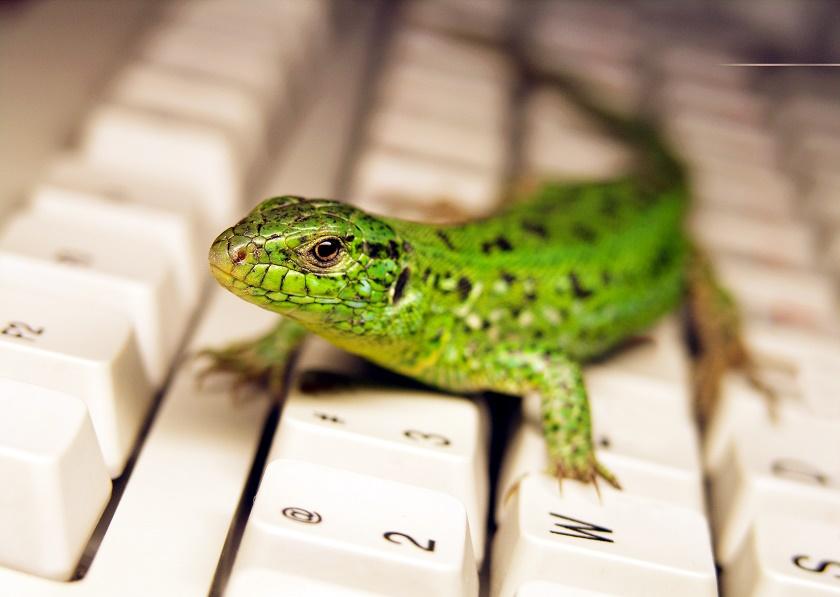 lizard on computer