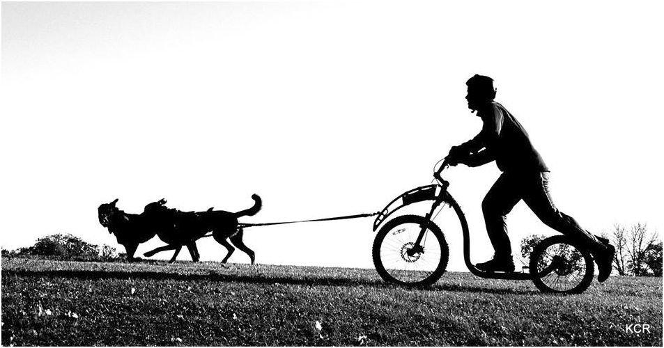 biking dog