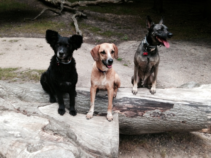 blog hop dogs