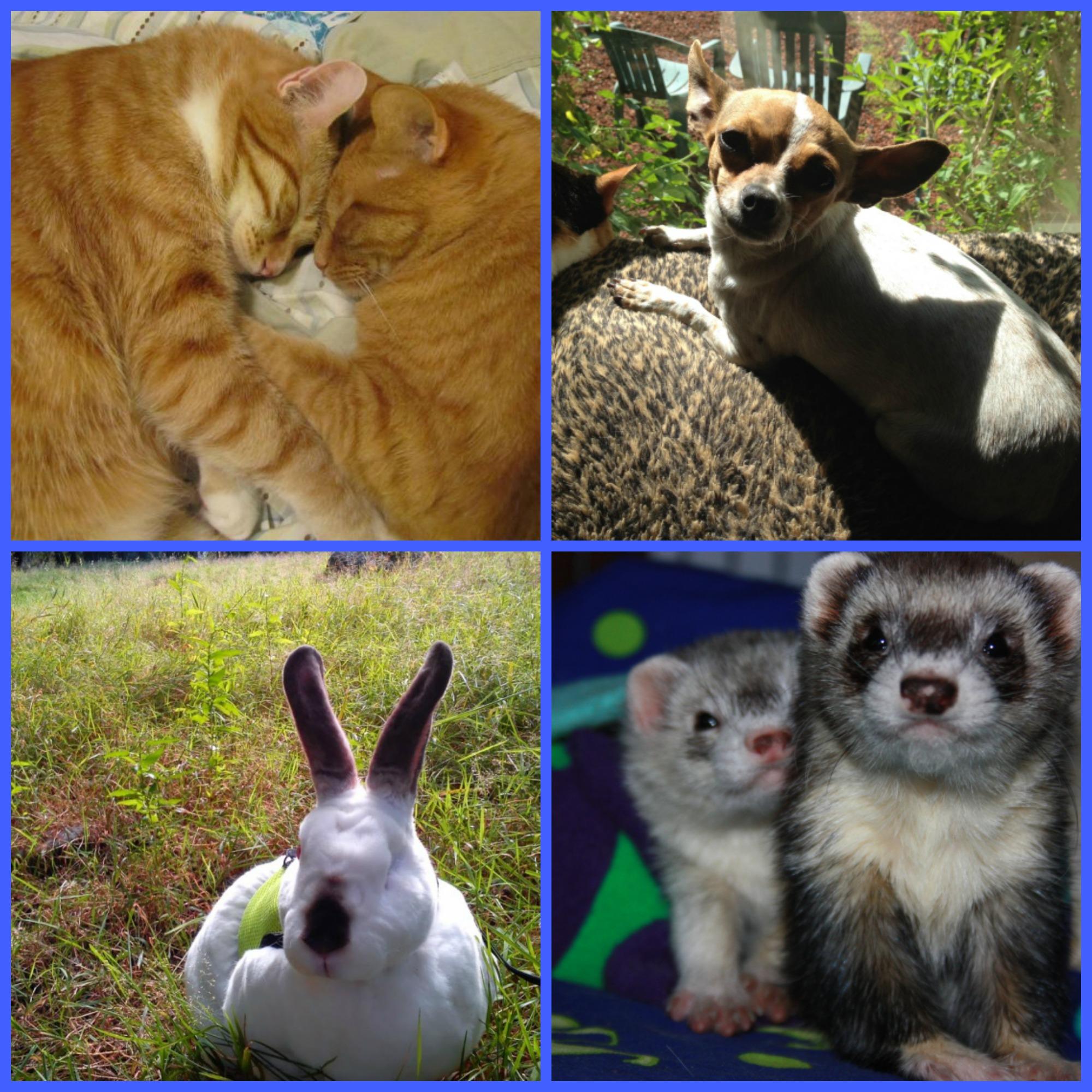 blog pets