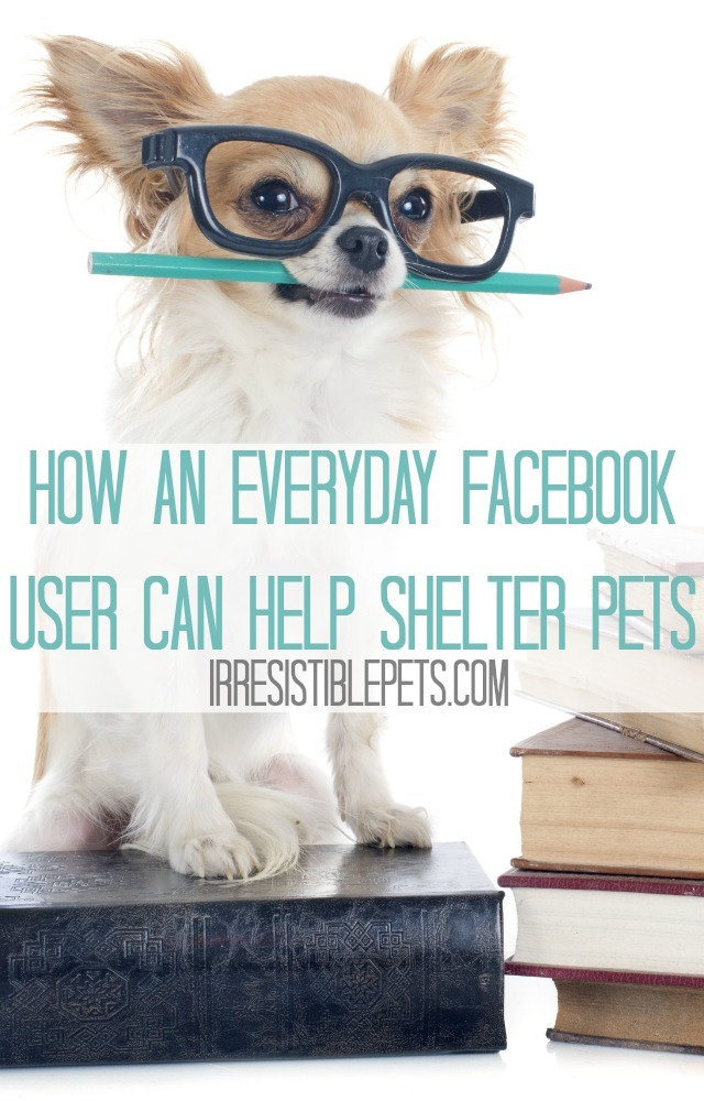 How-an-Everyday-Facebook-User-Can-Help-Shelter-Pets-Read-on-IrresistiblePets.com_thumb