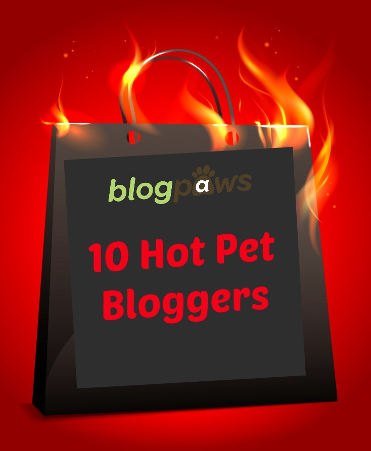 pet bloggers