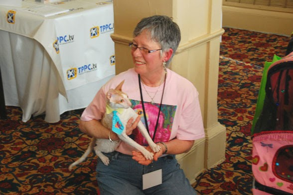 blogpaws-cats3