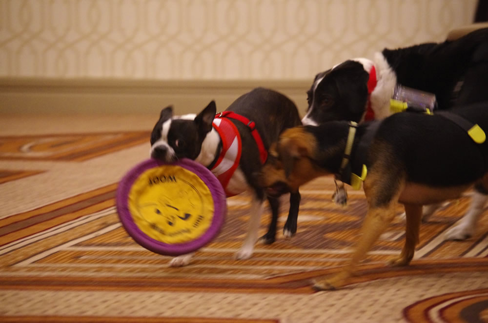 Dogs at Play BlogPaws