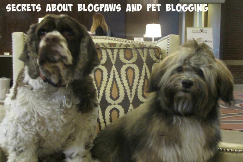 pet blogging secrets