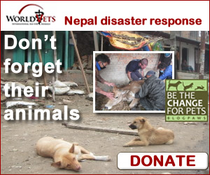Helping Pets in Nepal Earthquake Disaster - BlogPaws Blogger Disaster Response Network & World Vets