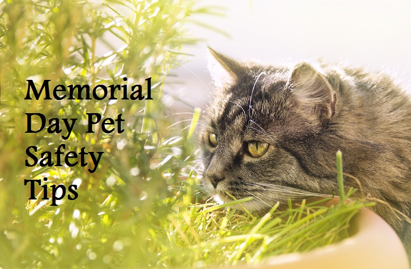 memorial day safety pets