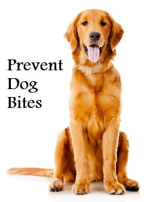 prevent dog bites
