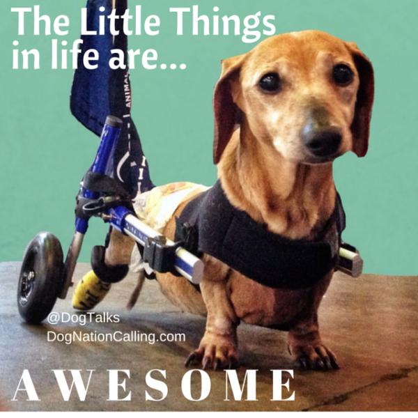 Cute dachshund in BlogPaws blog hop