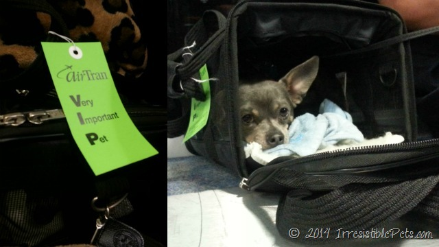 tips for air travel with your small dog