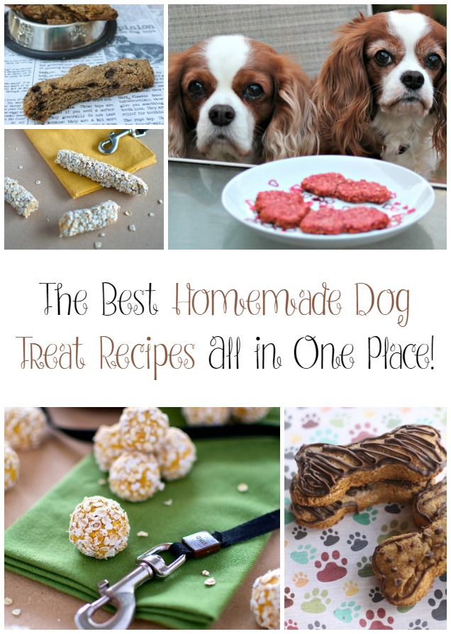 Top 10 Dog Foods  Best Grain Free Dry Dog Food  RECIPES