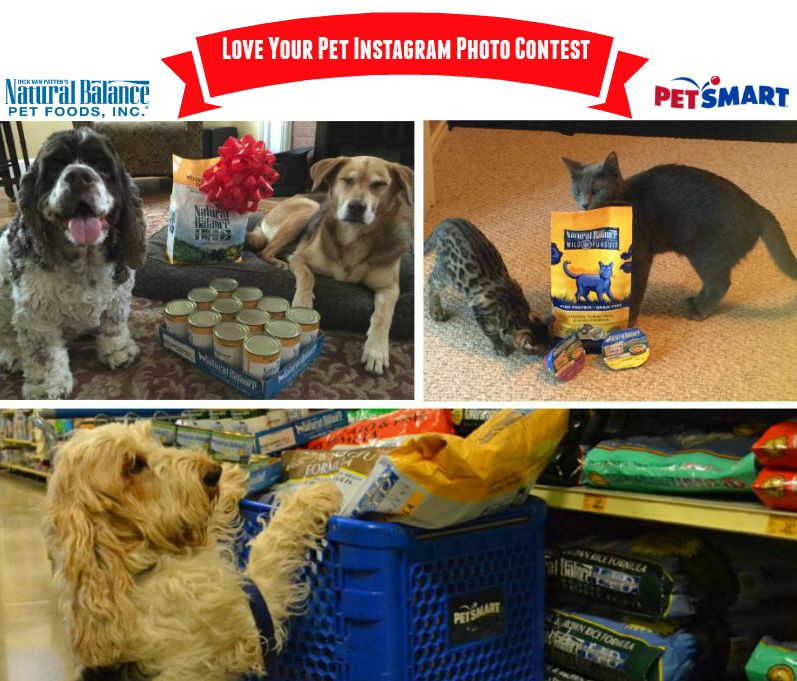 Love Your Pet photo contest