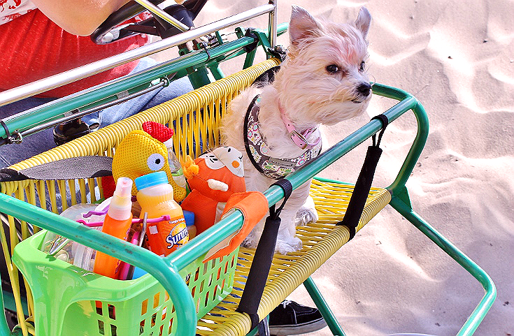 BlogPaws dog in a cart
