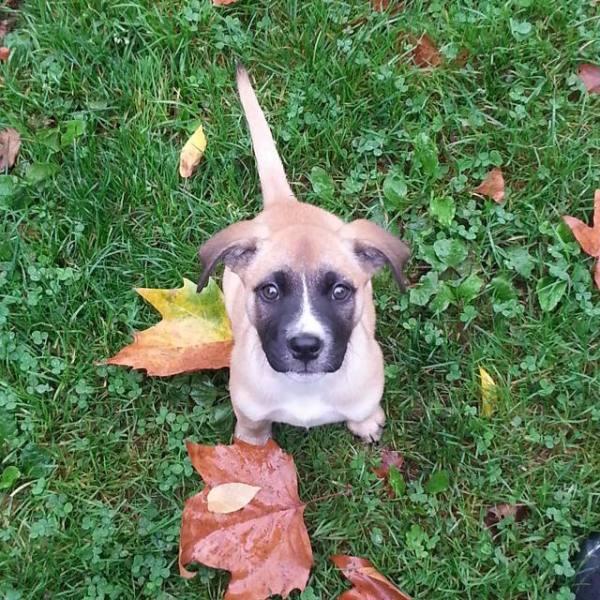 dog ready for autumn