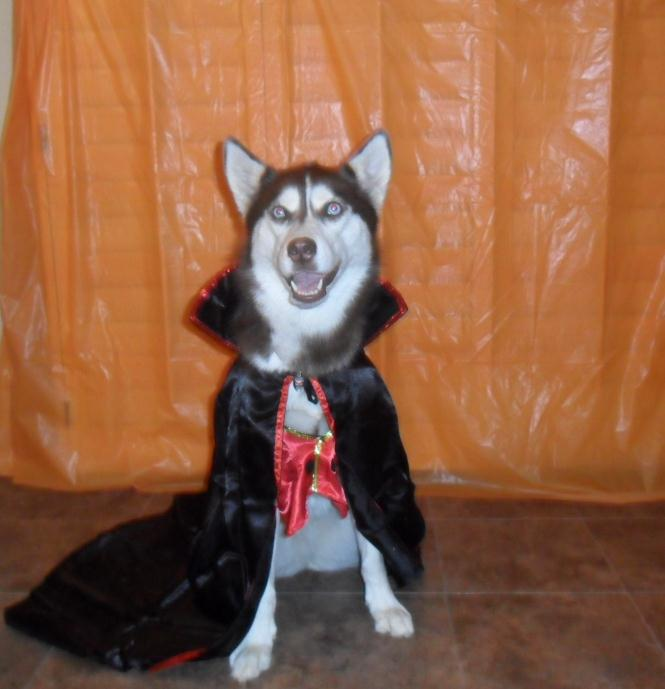 Cute dog vampire