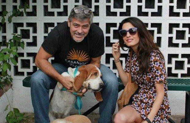 George Clooney basset rescue