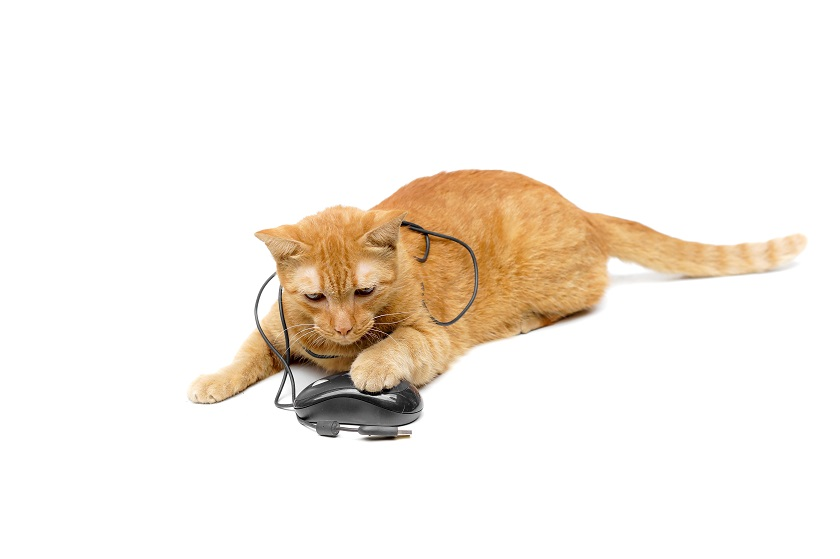 pet blogging routine cat with mouse