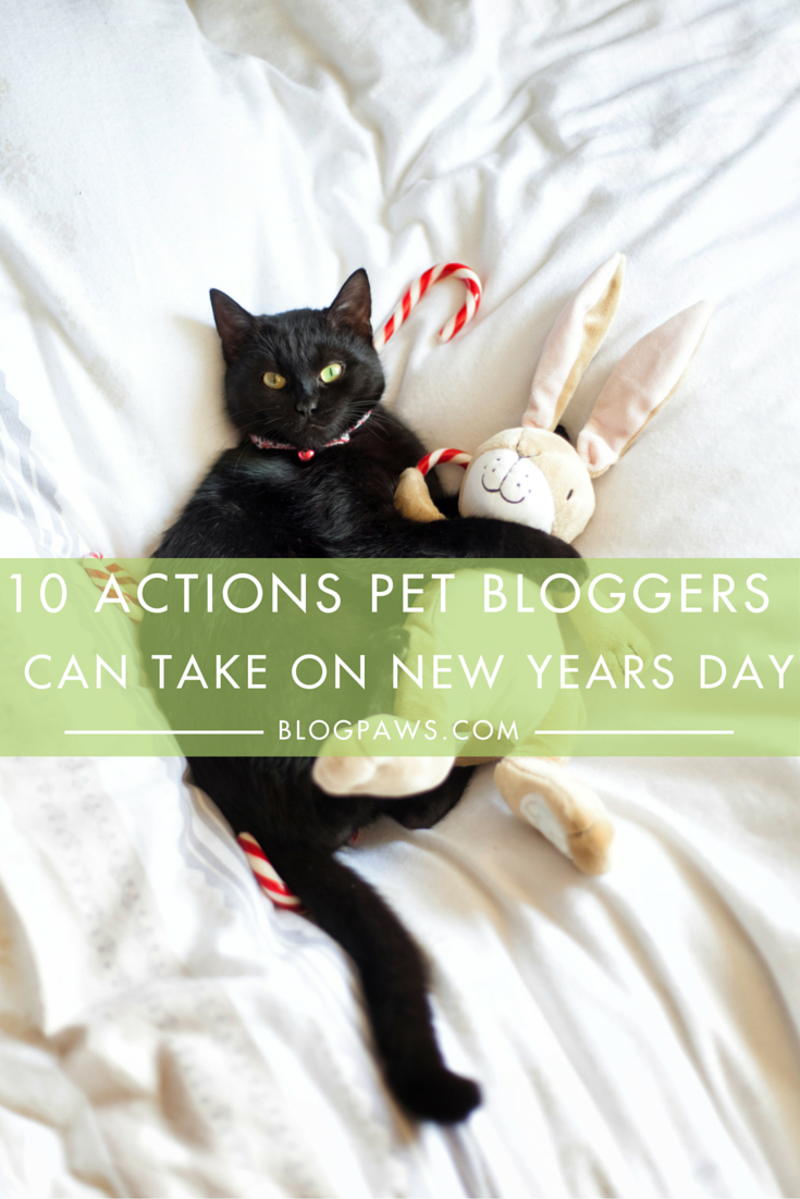 10 Actions Pet Bloggers Can Take On New Year's Day
