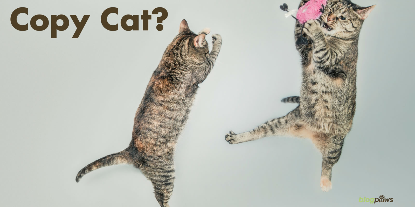 Copy Cat?