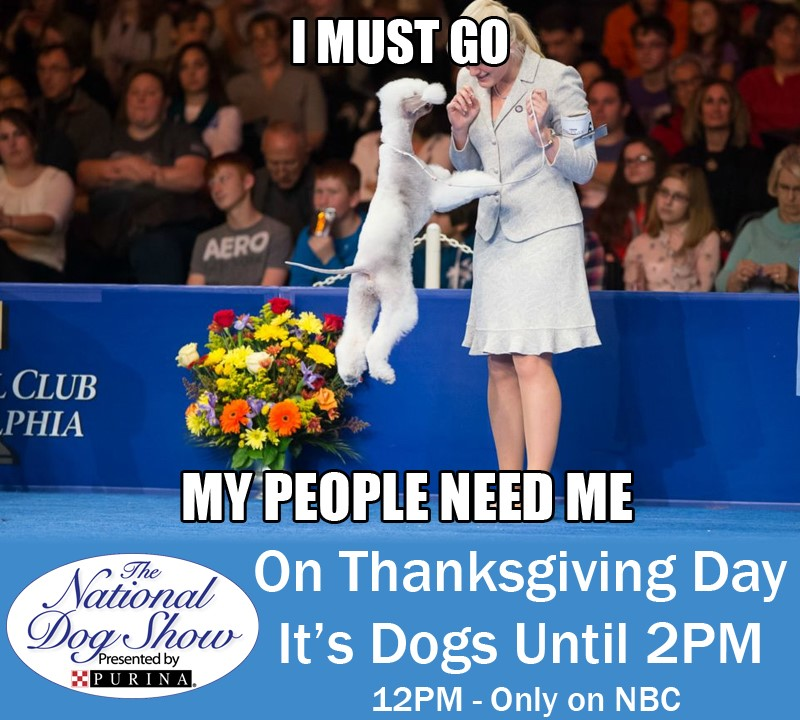 National Dog Show Day