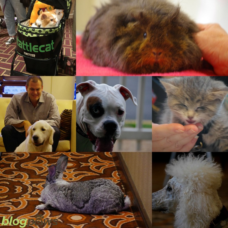Blog hop new year BlogPaws