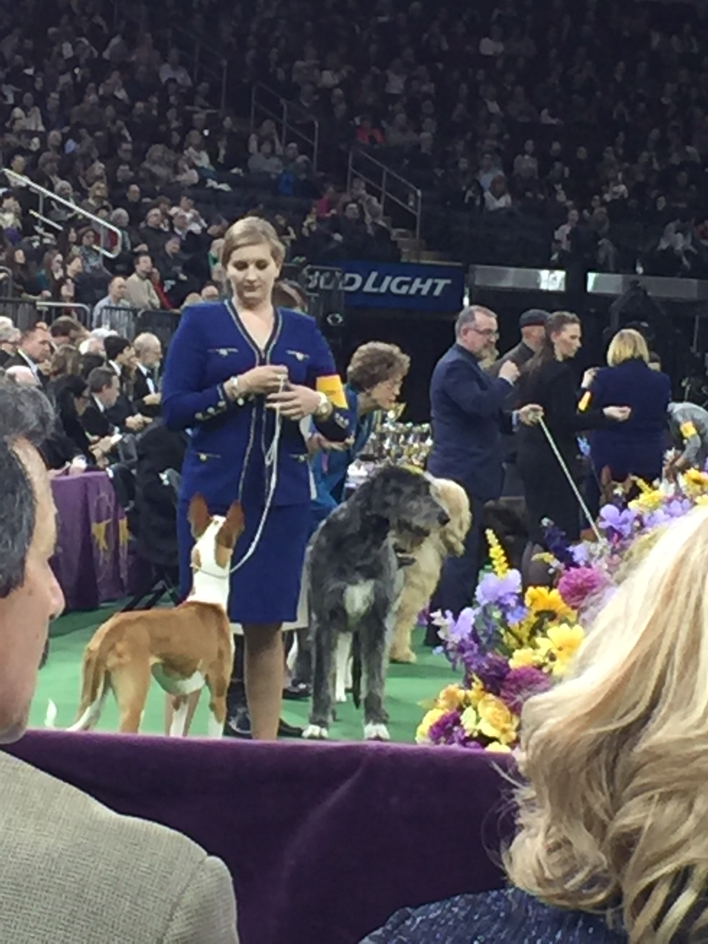 Westminster Dog Show Television Broadcast
