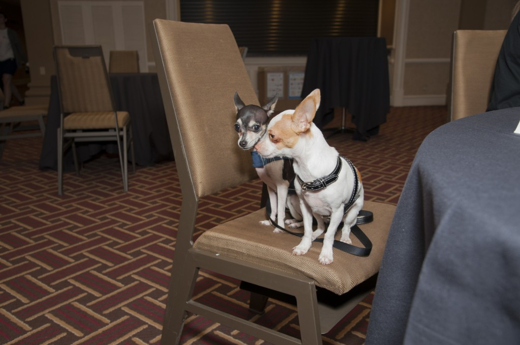 Cute dogs at conference