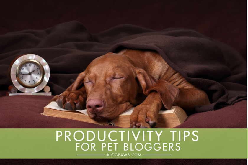 Productivity tips for pet bloggers