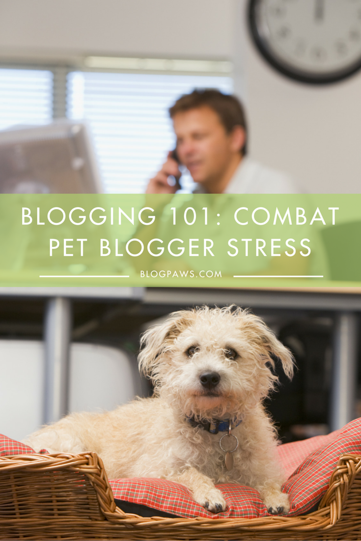Combat pet blogging stress