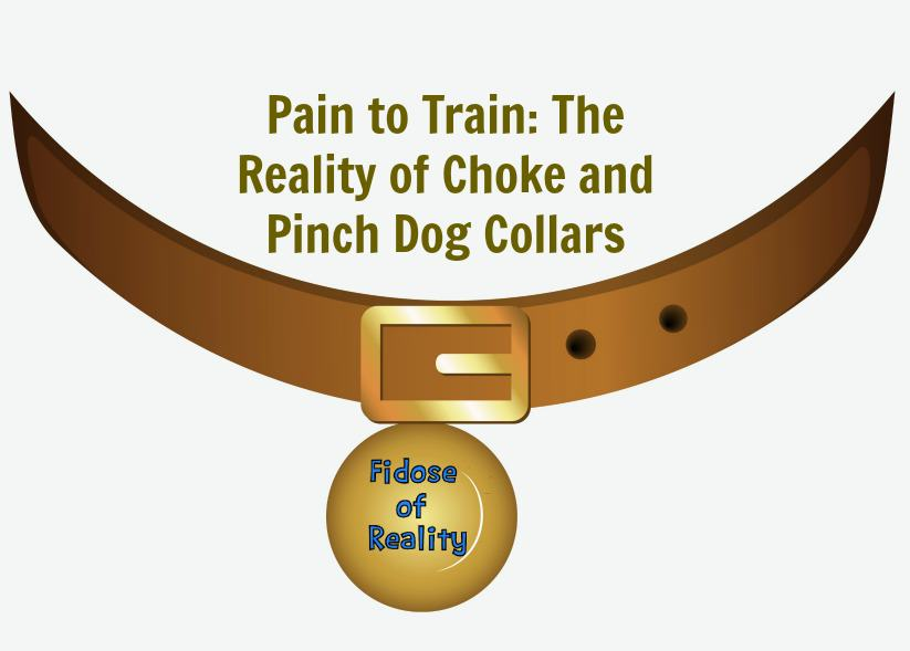 Pain to Train: The Reality of Choke and Pinch Dog Collars