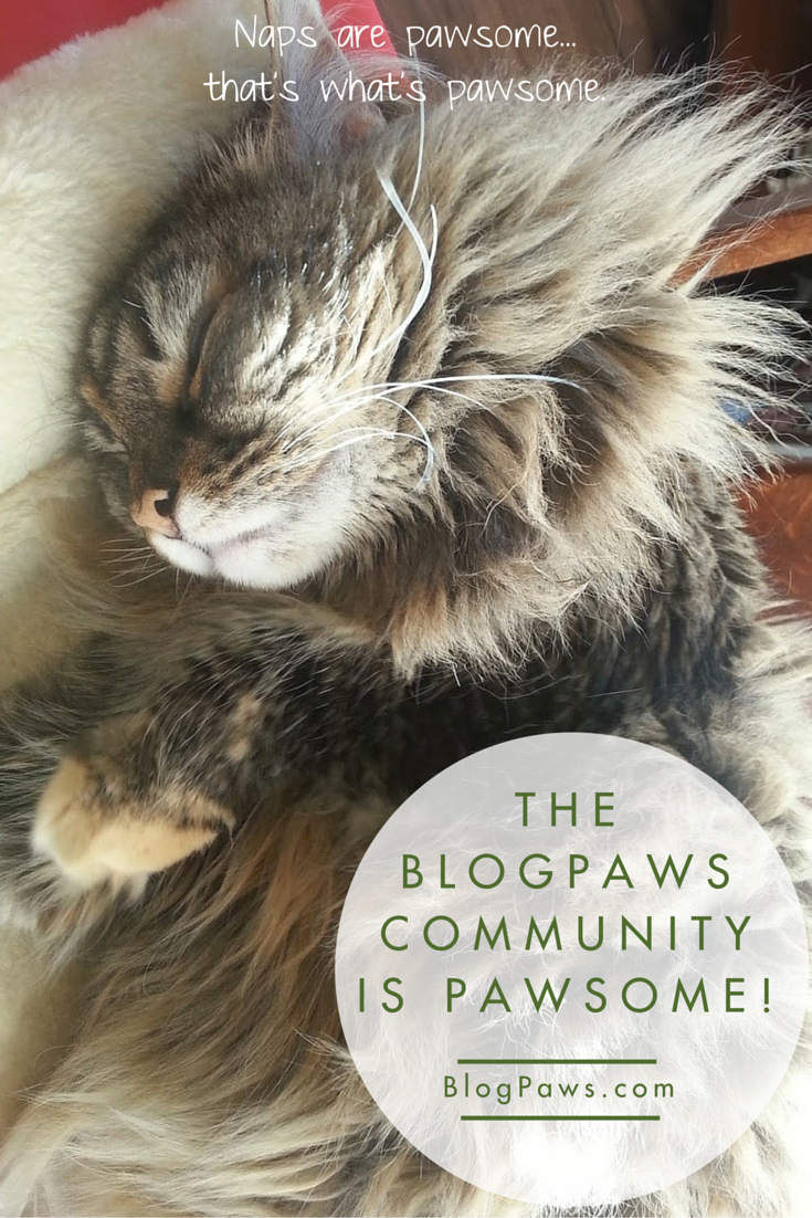 BlogPaws Community is Pawsome