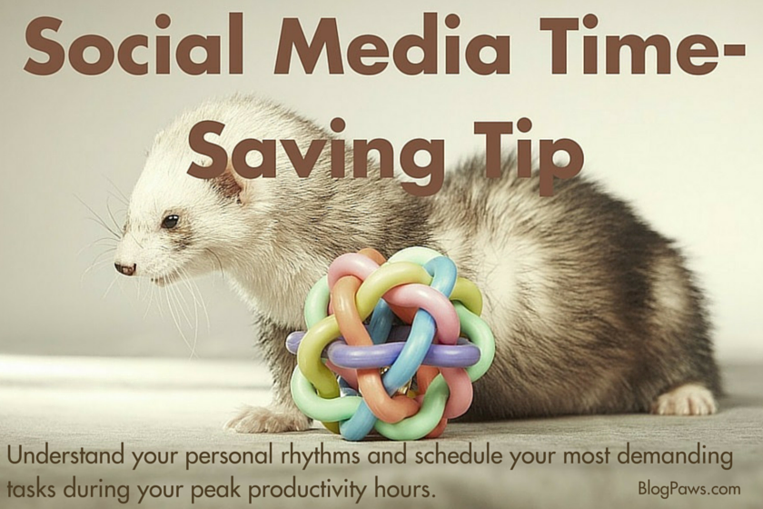 Social Media Time Management For Pet Bloggers