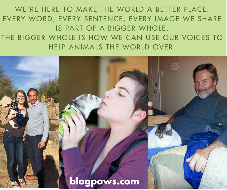 pet bloggers use their voice in service to pets the world over