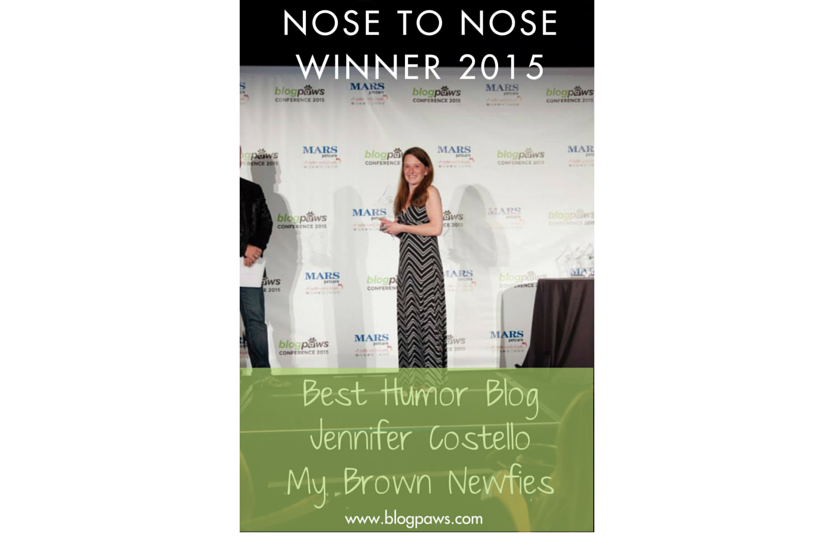 My Brown Newfies Best Humor Blog 2015 Nose to Nose Awards at BlogPaws