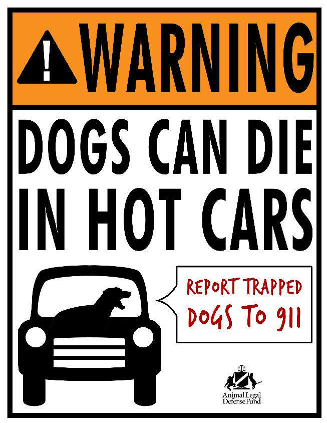 Dont leave pets in hot cars